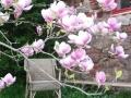 magnolienecke